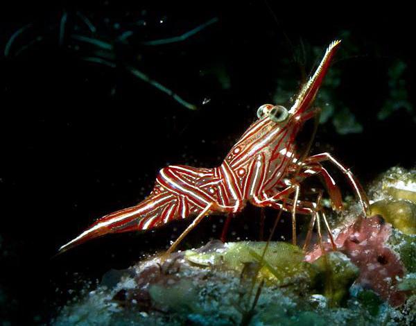 新华社:青岛海底世界五一推出观赏虾主题展