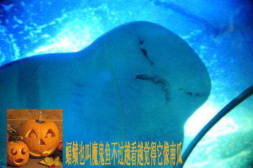 青岛新闻网:《鲁游记》之走进青岛海底世界