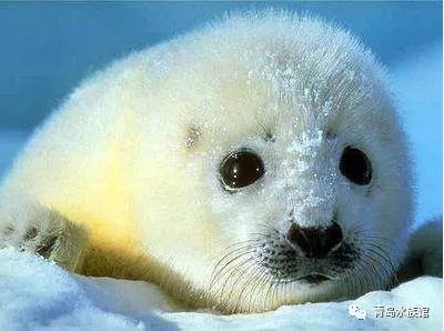 别再让可爱的海豹宝宝哭泣,让我们行动起来…&hellip